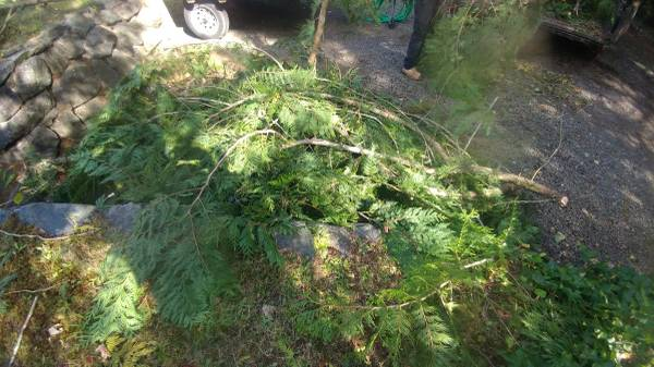 Tree Removal Port Orchard